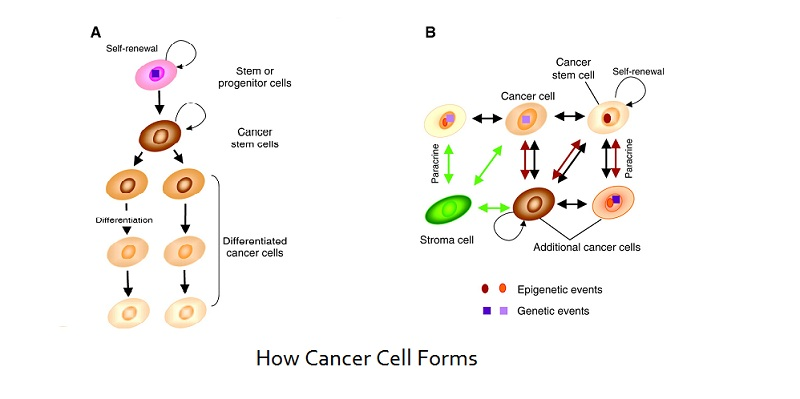 How cancer cell forms